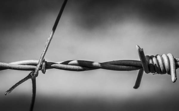 Photograph - Barbed Wire by Gary Gillette