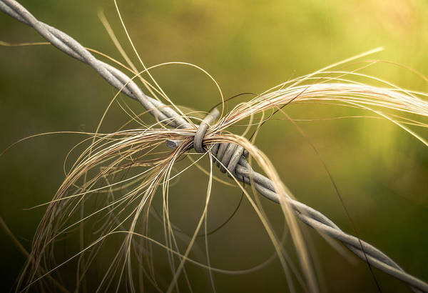 Wall Art - Photograph - Barbed Wire Hair by Mr Doomits