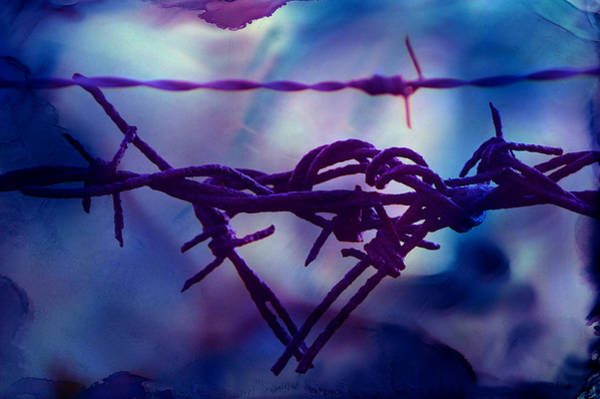 Photograph - Barbed Wire Love Series The Blues 2 by Lesa Fine