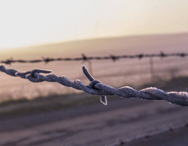 Photograph - Barbed Wire With Frost by Wes Jimerson