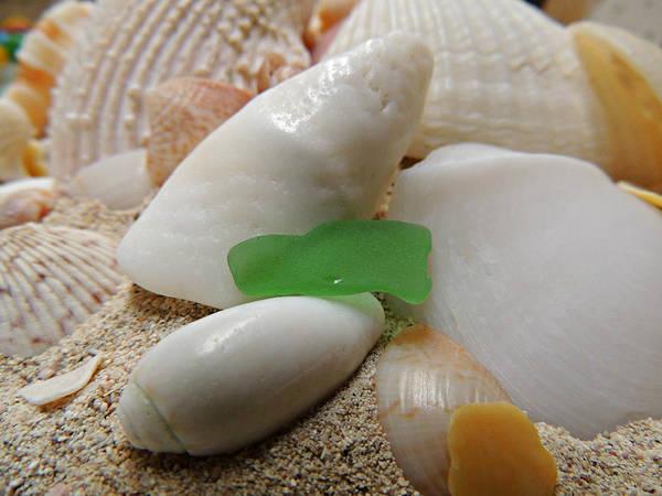 Photograph - Barbuda Seashells And Beach Glass by Kimberly Perry