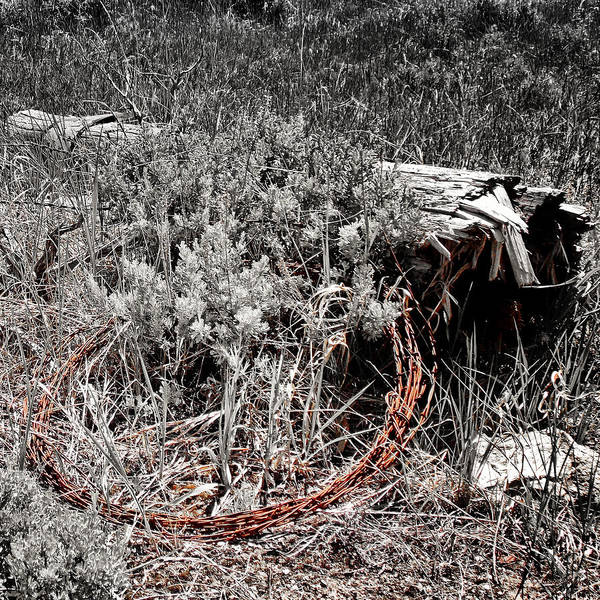 Photograph - Barbwire Wreath 1 by Susan Kinney