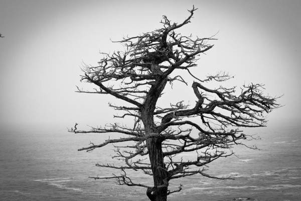 Photograph - Bare Cypress by Melinda Ledsome
