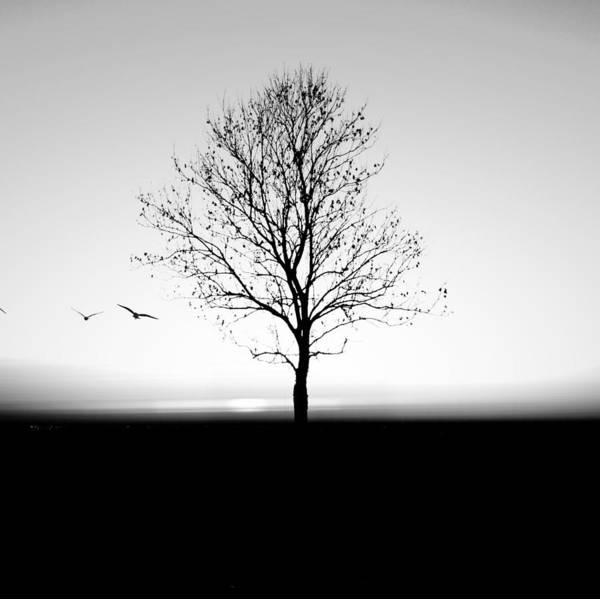 Photograph - Bare Tree On Silhouette Field Against by Marc Stapel / Eyeem