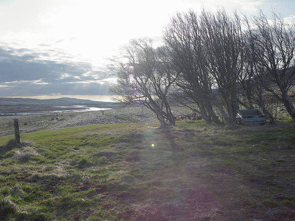 Reykjavik Photograph - Bare Trees Growing In Rural Landscape by Kmm Productions