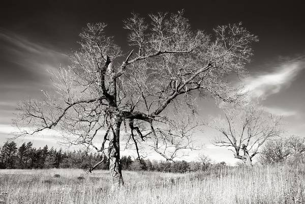 Arboretums Photograph - Bare Trees by Jim Hughes