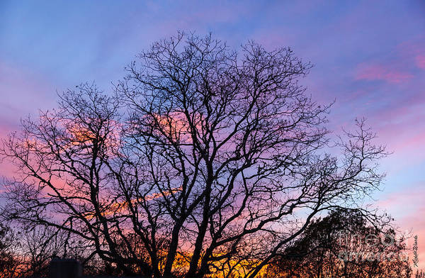 Photograph - Bare Trees by Michelle Constantine