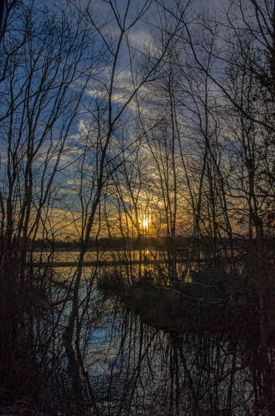 Photograph - Bare Trees Sunset by Beth Sawickie