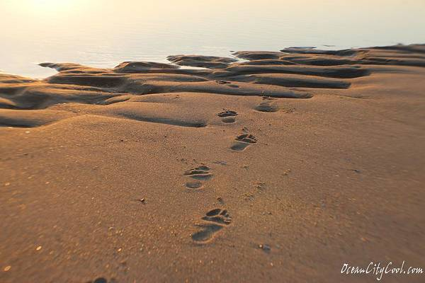 Photograph - Barefoot In Sand by Robert Banach