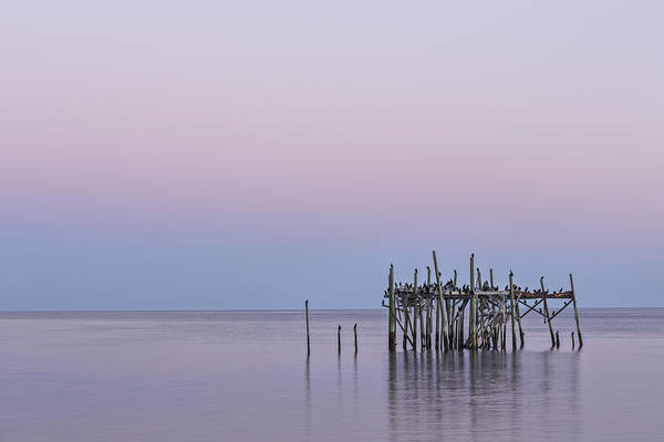 Wall Art - Photograph - Barely Standing by Jon Glaser