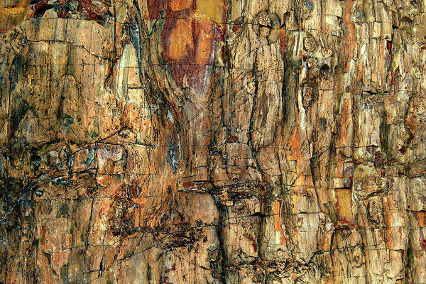 Tree Bark Wall Art - Photograph - Bark by Jure Kravanja