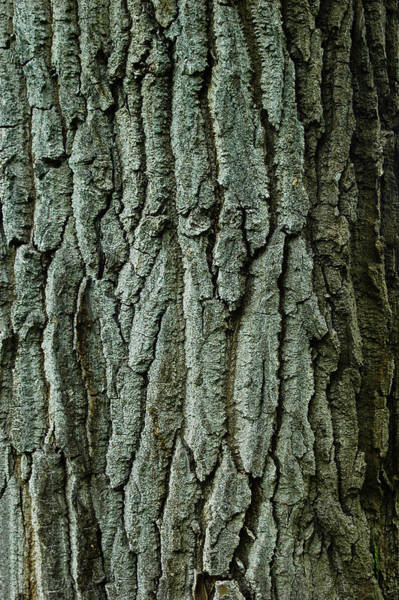 Barrett Photograph - Bark by Rhonda Barrett