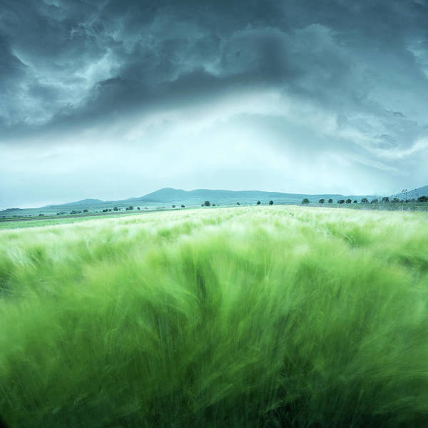 Storm Photograph - Barley Field by Floriana Barbu