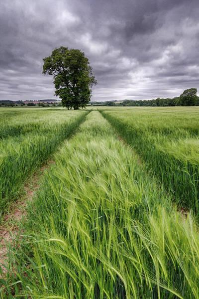 Nottinghamshire Photograph - Barley Field, Nottinghamshire by Alex Baxter