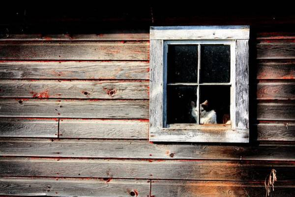 Photograph - Barn Cat On Watch  by David Matthews