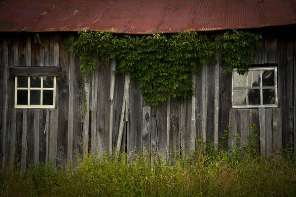 Tin Roof Wall Art - Photograph - Barn Eyes by Shane Holsclaw