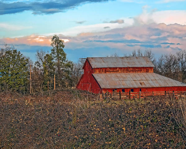 Photograph - Barn In The Berry Bushes by William Havle