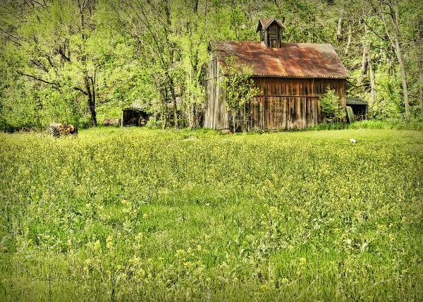 Photograph - Barn In Wild Turnips by Cricket Hackmann
