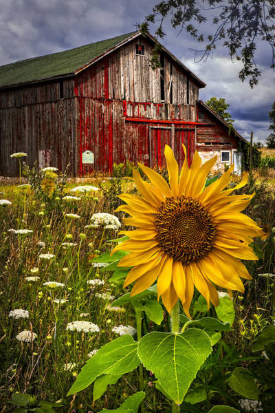 Old Barns Wall Art - Photograph - Barn Meadow Flowers by Debra and Dave Vanderlaan