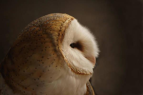 Owls Photograph - Barn Owl 3 by Ernie Echols