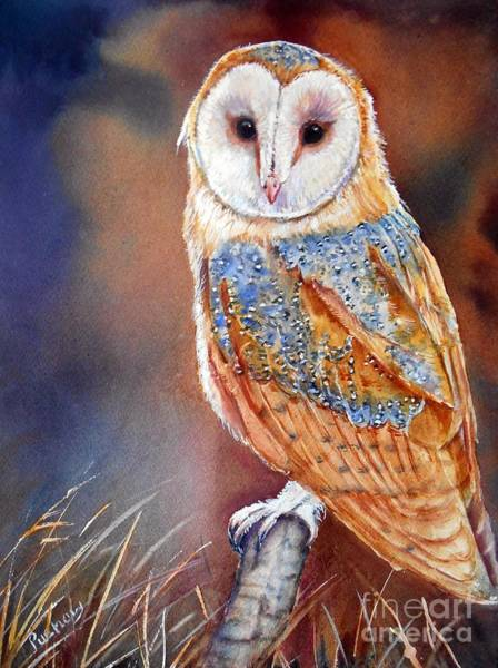 Barn Owl Painting - Barn Owl by Patricia Pushaw