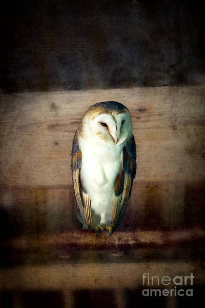 Hoot Wall Art - Photograph - Barn Owl Vintage by Jane Rix