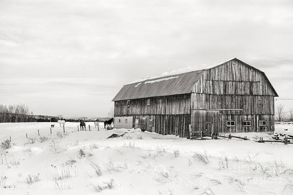 Wall Art - Photograph - Barn Quebec Province In  Black And White by Jane Rix