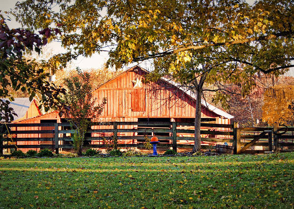 Photograph - Barn Through The Trees by Cricket Hackmann