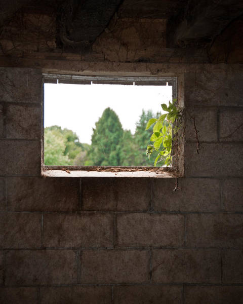Wall Art - Photograph - Barn With A View by Nickaleen Neff