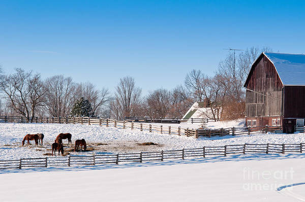 Photograph - Barn With Horses  by Les Palenik