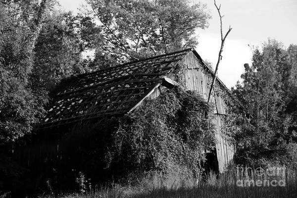 Test Of Time Photograph - Barn Without Roof by Dwight Cook