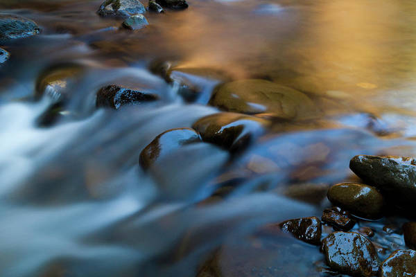 Ecosystem Photograph - Barnes Creek, Olympic National Park by Art Wolfe