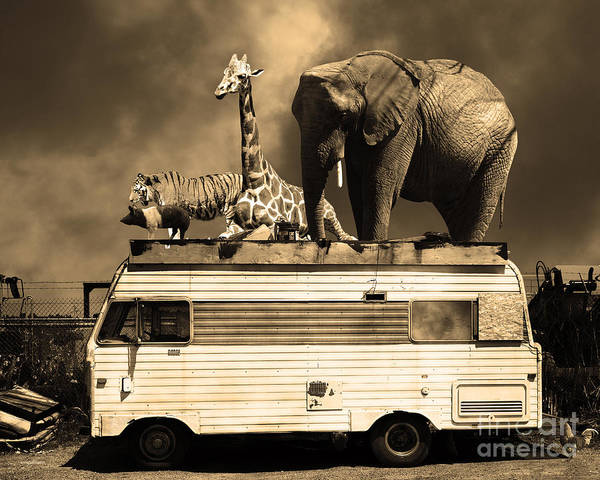 Colorful Giraffe Photograph - Barnum And Bailey Goes On A Road Trip 5d22705 Sepia by Wingsdomain Art and Photography