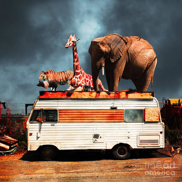 Colorful Giraffe Photograph - Barnum And Bailey Goes On A Road Trip 5d22705 Square by Wingsdomain Art and Photography