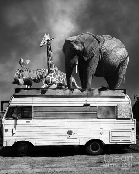 Colorful Giraffe Photograph - Barnum And Bailey Goes On A Road Trip 5d22705 Vertical Black And White by Wingsdomain Art and Photography