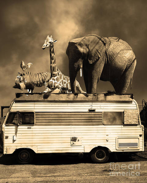 Colorful Giraffe Photograph - Barnum And Bailey Goes On A Road Trip 5d22705 Vertical Sepia by Wingsdomain Art and Photography