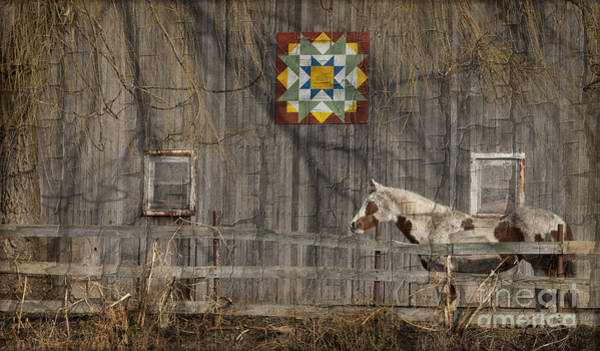 Wall Art - Photograph - Barnyard Patterns With Effects by Roger Bailey