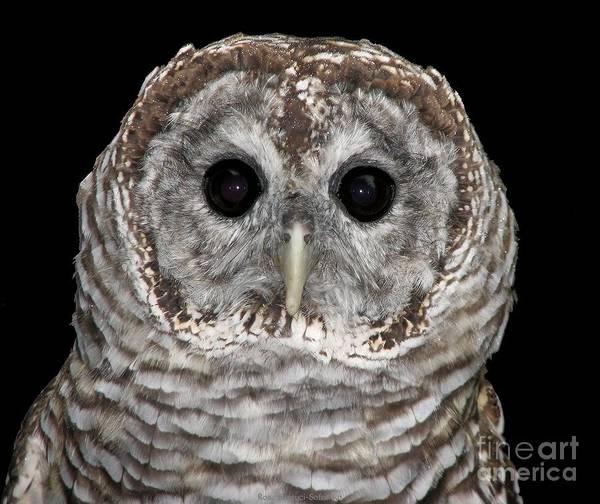 Hawk Creek Photograph - Barred Owl 3 by Rose Santuci-Sofranko