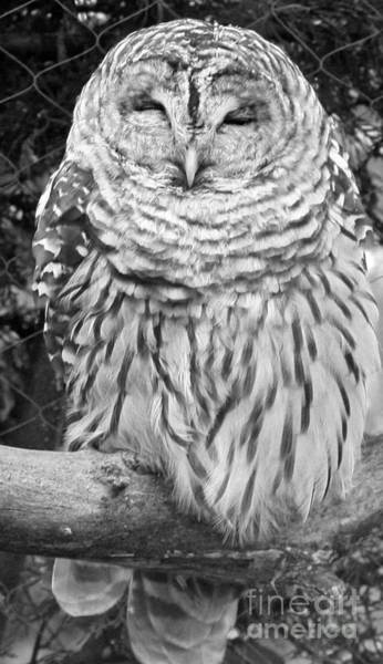 Canon Rebel Photograph - Barred Owl In Black And White by John Telfer