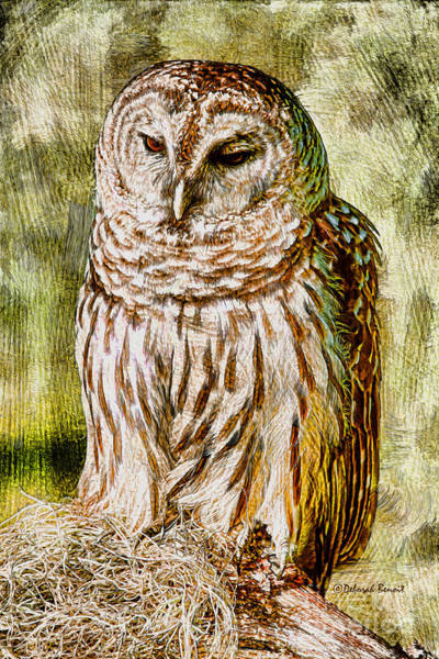 Photograph - Barred Owl On Moss by Deborah Benoit