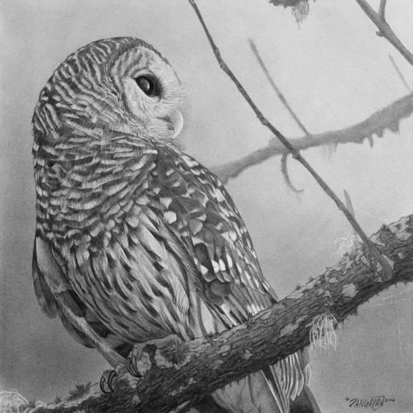Graphite Drawing - Barred Owl by Tim Dangaran