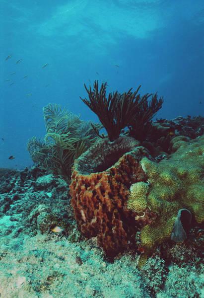 Sponge Photograph - Barrel Sponge by Jim Edds/science Photo Library