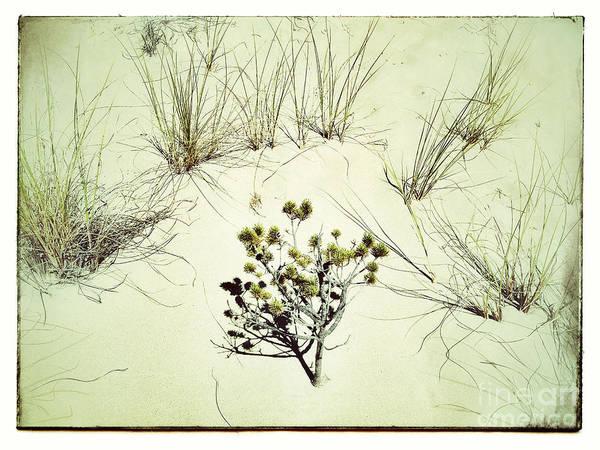 Oregon Sand Dunes Photograph - Barren Beauty by Venetta Archer