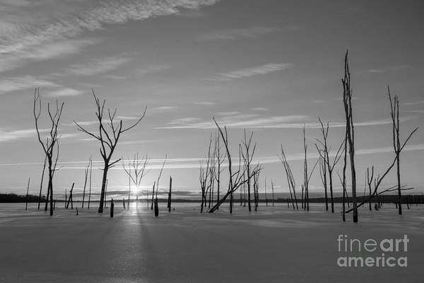 Nikon D800 Wall Art - Photograph - Barren Forest Sunrise Bw by Michael Ver Sprill