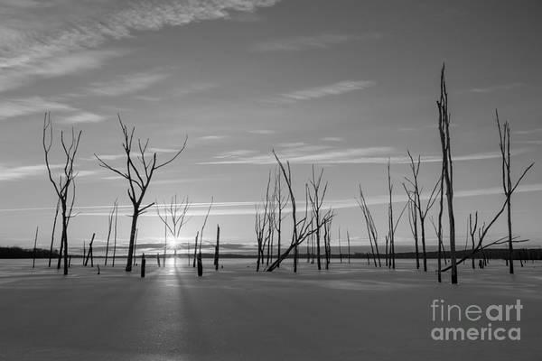 D800 Photograph - Barren Forest Sunrise Bw by Michael Ver Sprill