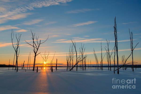 Nikon D800 Wall Art - Photograph - Barren Forest Sunrise by Michael Ver Sprill