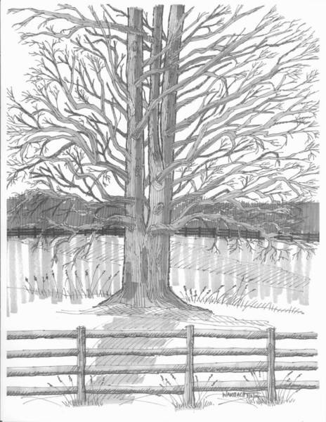 Drawing - Barrytown Tree by Richard Wambach
