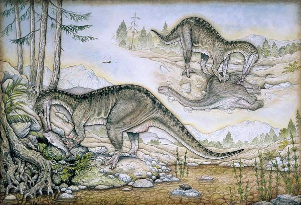Wall Art - Photograph - Baryonyx Walkeri Dinosausr by Natural History Museum, London/science Photo Library