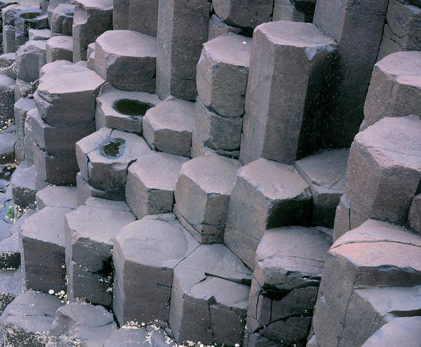 Basalt Columns Photograph - Basalt Columns Of Giant's Causeway by Simon Fraser/science Photo Library