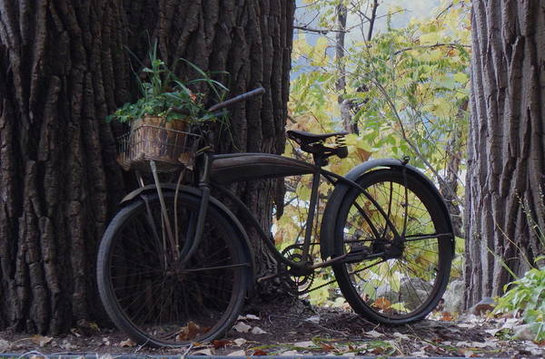 Photograph - Basket Case by Wild Thing